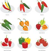 collection of chili pepper in vector