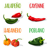 Vector Illustration of four different types of chili