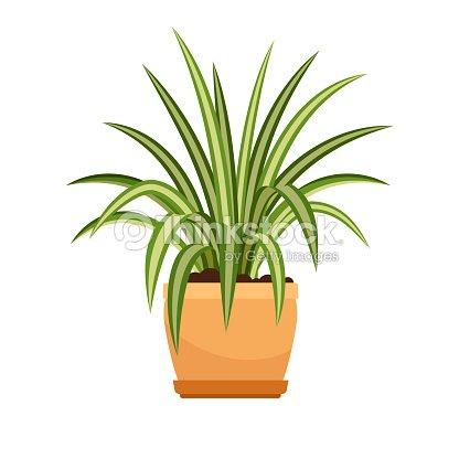 Chlorophytum Plante Dinterieur En Pot De Fleur Clipart Vectoriel