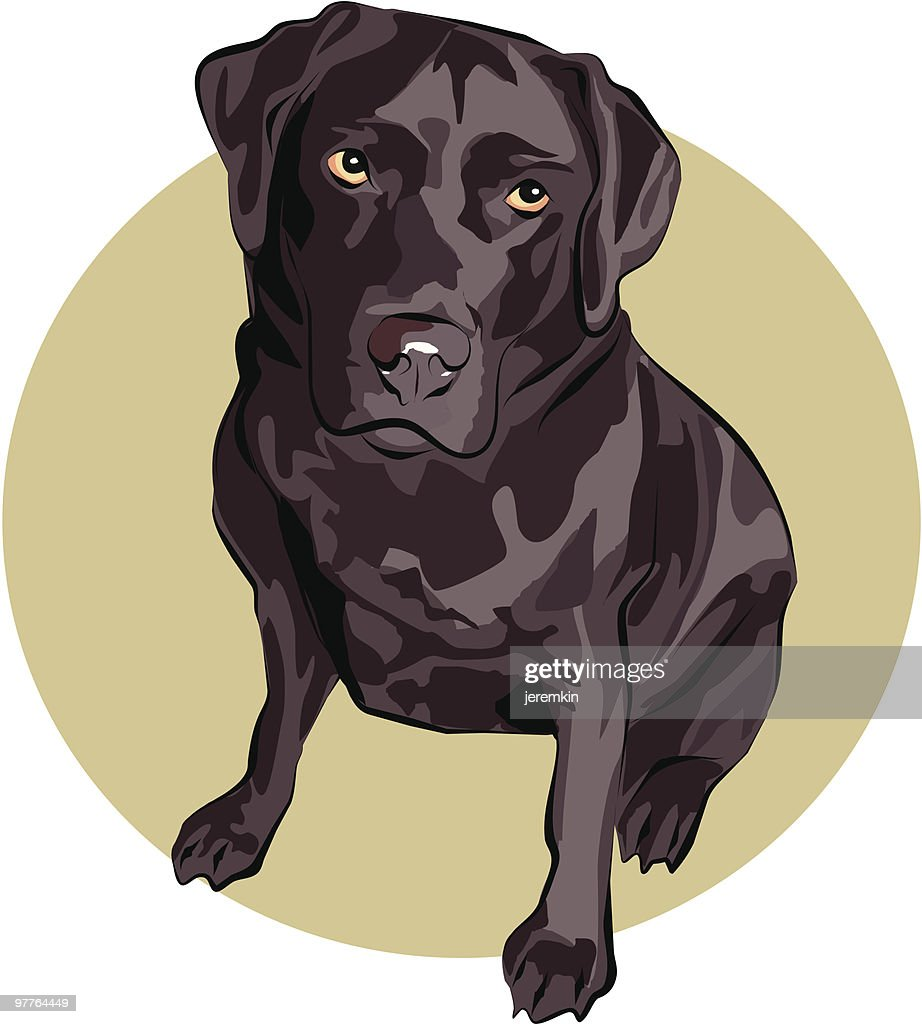 Chocolate Labrador : Vector Art