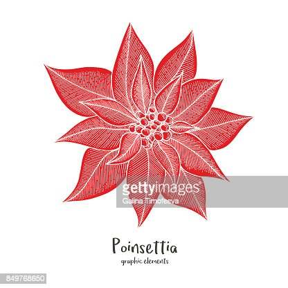 Christmas Greeting Card Template With Hand Drawn Poinsettia Flower