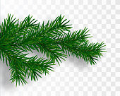 Pine tree branch. Vector Christmas tree. Vector illustration