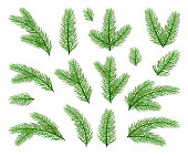 Christmas decorations. Set of fir-tree branches isolated on white background, illustration.