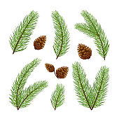 909e40e2c9ef Christmas decorations. Set of fir-tree branches with pine cones isolated on  white background