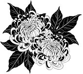 Chrysanthemum vector on white background.Chrysanthemum flower by hand drawing.Floral tattoo highly detailed in line art style.Flower tattoo black and white concept.