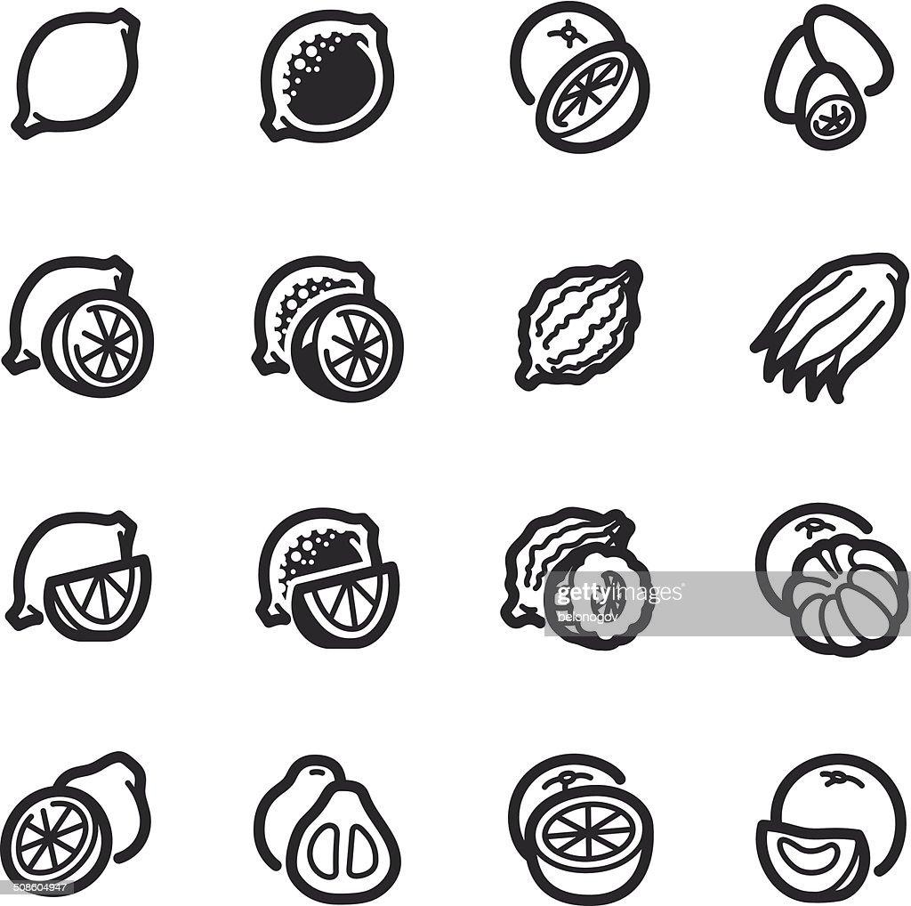 Citrus fruits icons – Bazza series : Vector Art