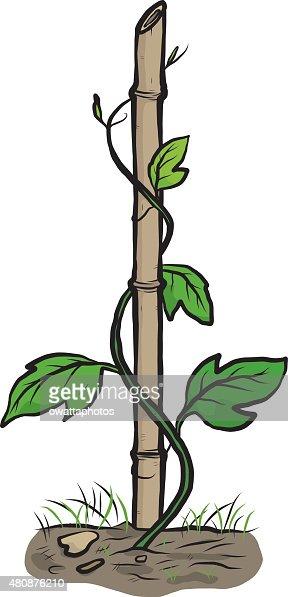 Kletterer Pflanzen Schleichenden Und Bambus Vektorgrafik Thinkstock