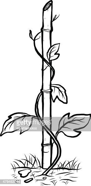 Klettern Pflanze Auf Bambus Vektorgrafik Thinkstock