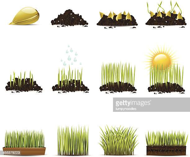 Clip art animation of progression of growing grass