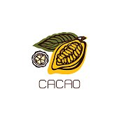 Cocoa fruit with leaves. Label, emblem, logo. Isolated object on white background. Hand drawn. Vector illustration.