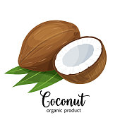 Vector coconut in cartoon style for brochures, banner and label cosmetic product for hair and body care