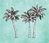 Hand drawn vector illustration of coconut palm trees. Old paper background. Ink sketch. Retro style.