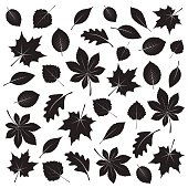 Collection of Black Leafs. Vector Illustration.
