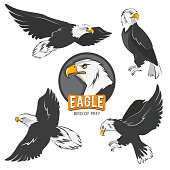 Collection of cartoon eagles. Flying birds isolate on white. Eagle animal flying, american predatory bird. Vector illustration