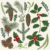 Vector set with Christmas plants. Botanical illustration. Branch of holly, spruce, pine, boxwood, spruce and pine cones. Design elements isolated on white background. Engraving style.