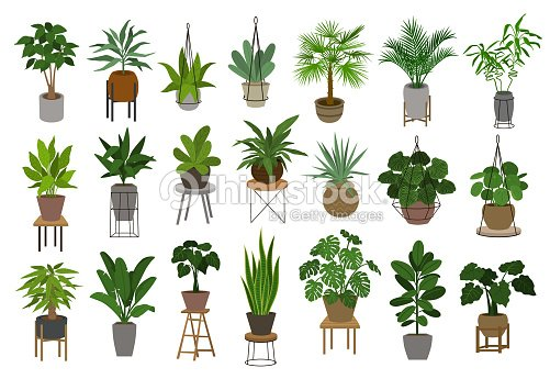 collection of different decor house indoor garden plants in pots and stands graphic set : stock vector