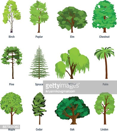 Colección de diferentes tipos de árboles : Arte vectorial