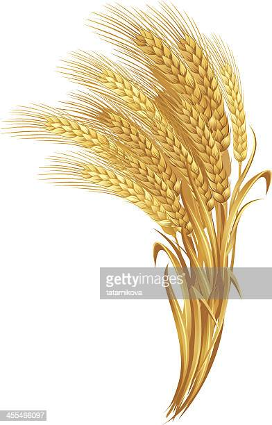 A collection of gold wheat against a white background