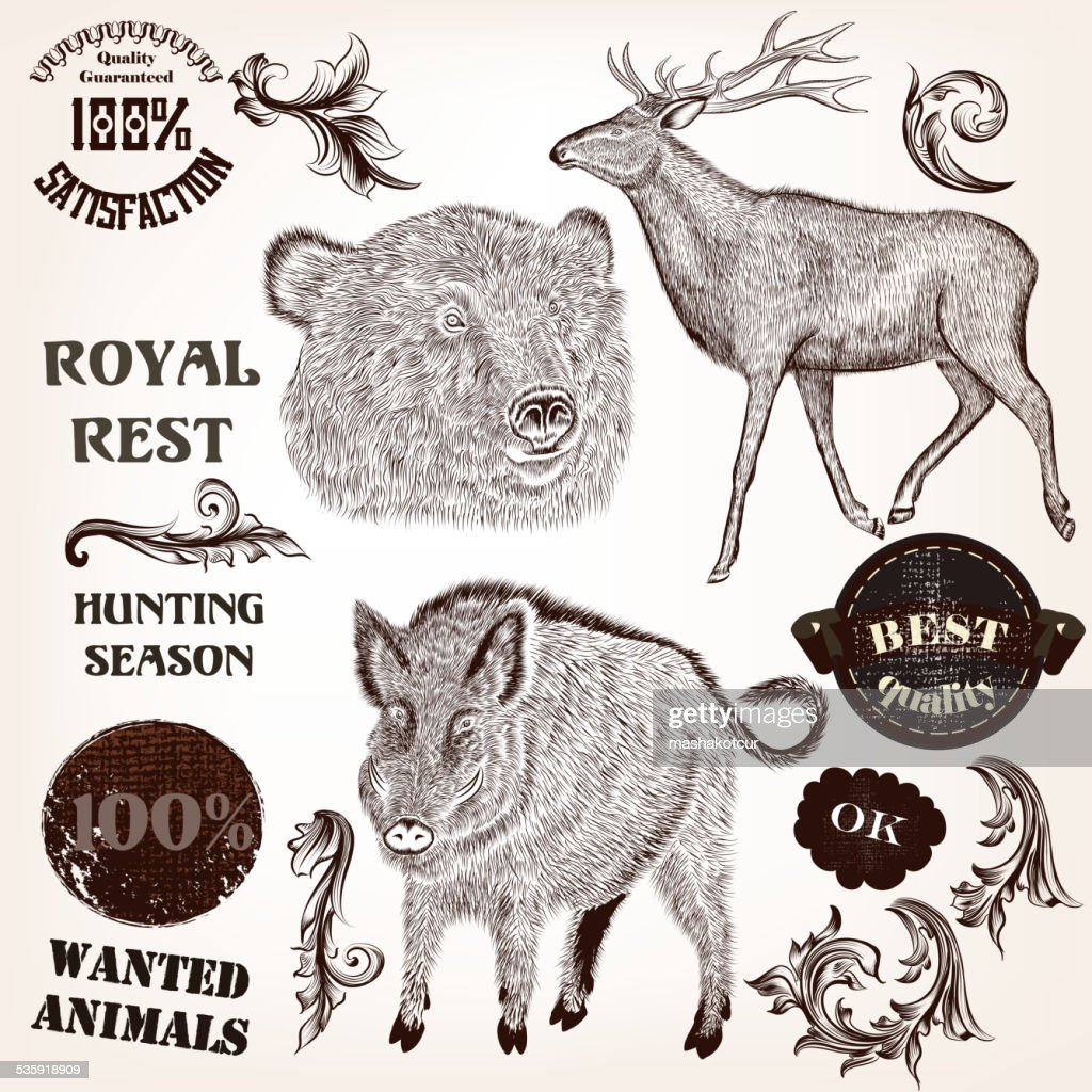 Collection of hand drawn animals, labels and swirls in antique : Vector Art
