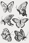 Butterfly collection, illustration, drawing, engraving ink line art vector