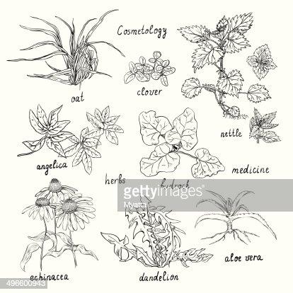 Collection De La Main Des Plantes Sont également Utilisées