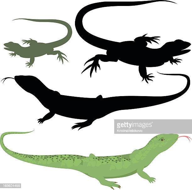 A collection of lizard illustrations