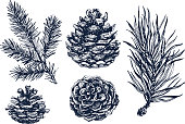 Pinecones and coniferous branches drawing isolated on white background. Ink illustration in vintage engraved style. Collection of pine forest elements.