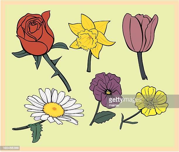 Collection de Six fleurs