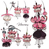 Collection of vector flowers in hand drawn style pink color