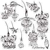 Collection of vector flowers in hand drawn style
