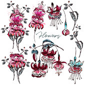Collection of vector flowers in pink color, watercolor style