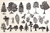 Big collection or set of hand drawn trees in engraved style