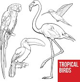 Bright and colorful exotic tropical birds - flamingo, macaw, hummingbird and toucan, set of sketch style vector illustrations isolated on white background. Set of hand drawn tropical birds