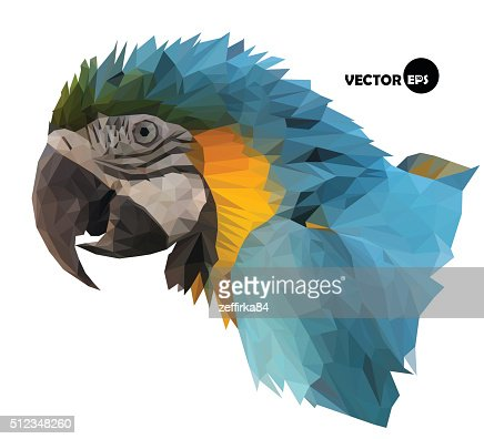 colorful macaw parrot`s head : stock vector