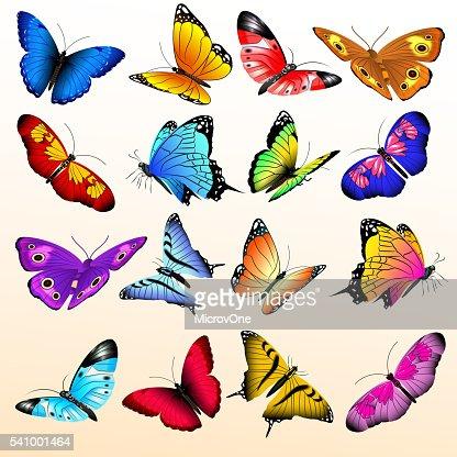 Colorful realistic butterflies big vector set : Vector Art