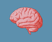Engraving red pink brain side view with watercolor and drawing illustration on blue turquoise color background
