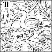 Coloring book for children, colorless alphabet. Letter I, ibis