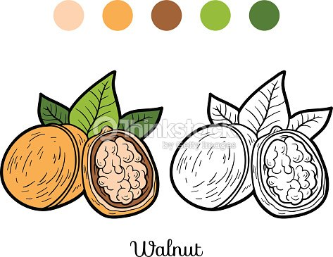 Coloring Book For Children Fruits And Vegetables Walnut