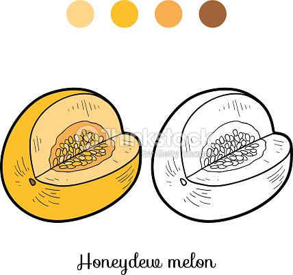 Coloring Book Fruits And Vegetables Honeydew Melon