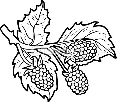 Coloring Book Fruits And Vegetables Blackberries Vector Art