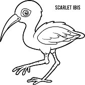 Coloring book for children, Scarlet ibis