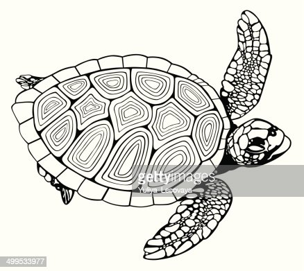Coloring book turtle vector art