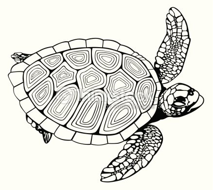 Coloring Book Turtle Vector Art | Thinkstock