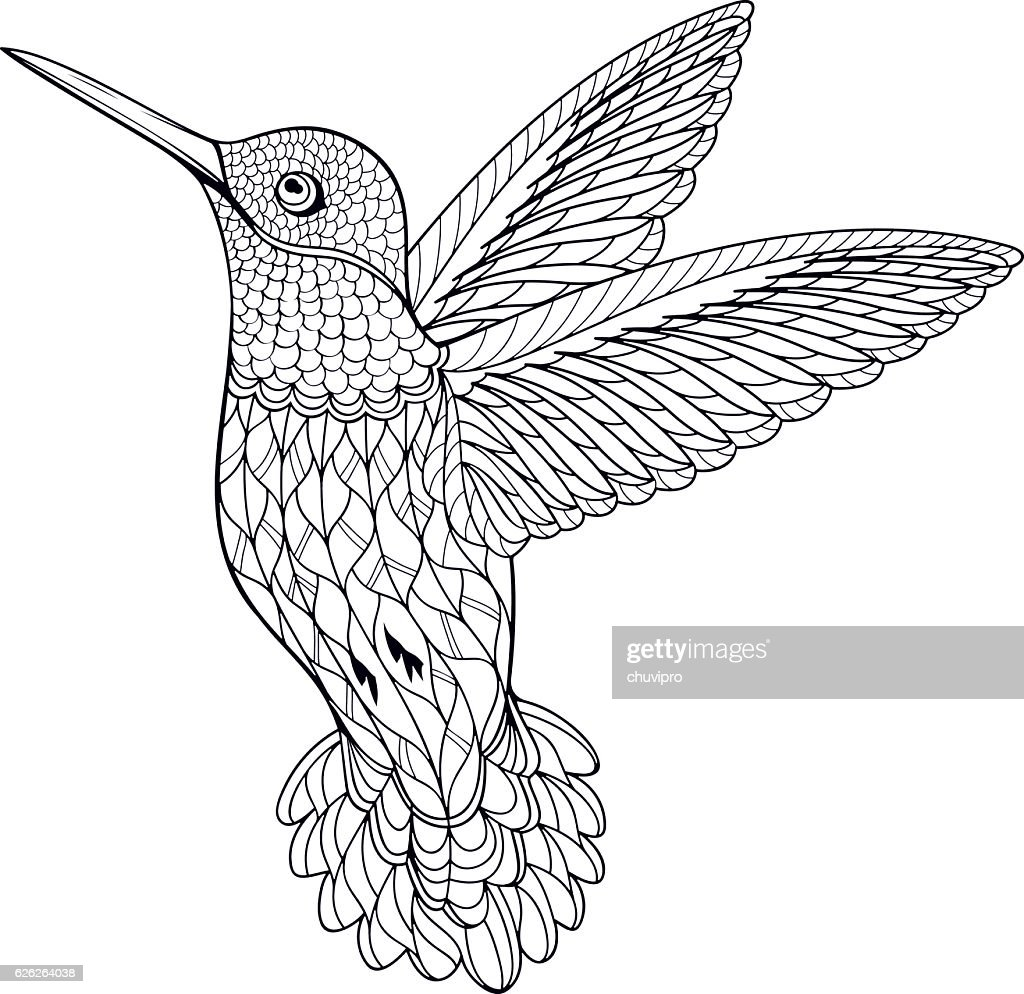 coloring page hummingbird vector art getty images