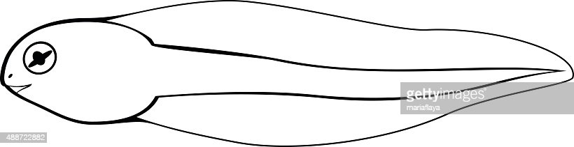 Coloring Page Tadpole Vector Art Thinkstock