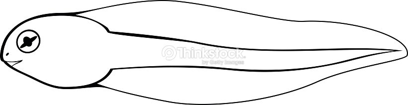 Coloring Page Tadpole Vector Art | Thinkstock