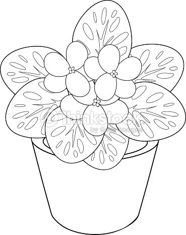 violet flower coloring page - thinkstock