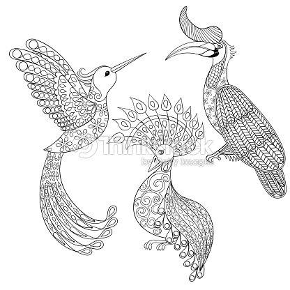 Página Para Colorear Rinoceronte Con Aves Pájaros Y Exóticos Colibrí ...