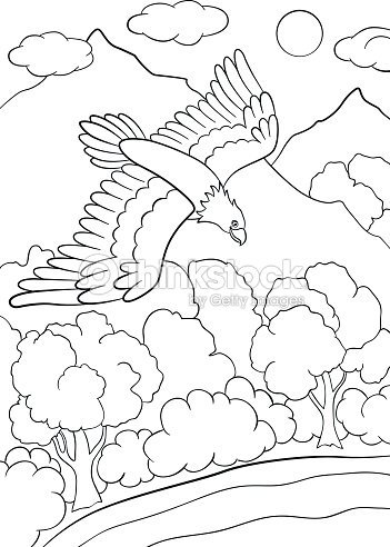 Coloring Pages Wild Birds Cute Eagle Flying Under The Forest Vector Art