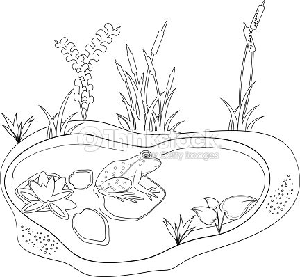 Coloring With A Frog And Pond Vector Art | Thinkstock